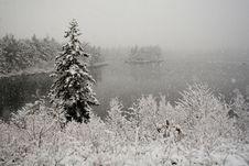 Free Winter Snowfall Royalty Free Stock Image - 4973146