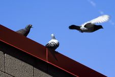 Free Doves On The Roof Stock Image - 4973351