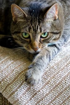 Free Cat Stare Royalty Free Stock Images - 4974929