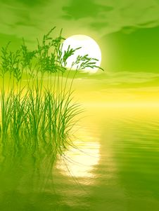 Free Water Grass Royalty Free Stock Photos - 4975548