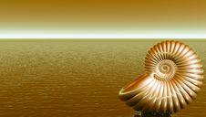 Free Shell Royalty Free Stock Image - 4975576