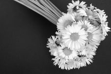 Free Bouquet Of Daisies Royalty Free Stock Images - 4975819
