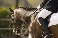 Free Horse Royalty Free Stock Image - 4976306