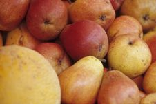 Free Pears Royalty Free Stock Photo - 4976395