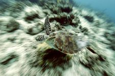 Free Turtle In Motion Royalty Free Stock Photography - 4976867