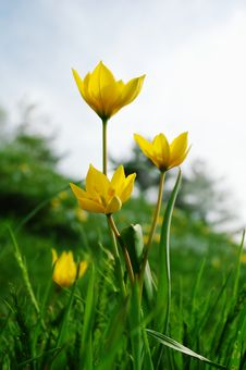 Free Yellow Flowers Stock Photography - 4978692