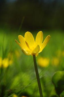 Free Yellow Flower Stock Photos - 4978723