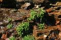 Free Small Waterfall Stock Photography - 4981212