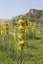 Free Yellow Flower Stock Photo - 4983700