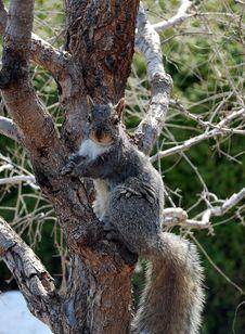Free Squirrel Stock Image - 4981561