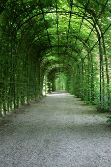 Free Plants In A Arch Royalty Free Stock Photo - 4981735