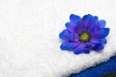 Free Spa Essentials, Towels And Flower Royalty Free Stock Photo - 4982165