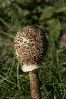 Free Mushroom Stock Photos - 4984633