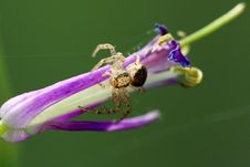 Free Spider On A Flower Stock Photos - 4984753