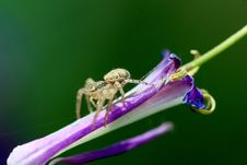 Spider On A Flower Royalty Free Stock Photography