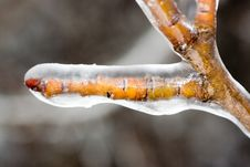 Free Brown Branch Covered With Ice Stock Image - 4985041