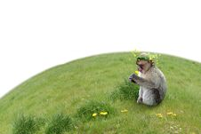 Free Monkeys Birthday Stock Photos - 4986203
