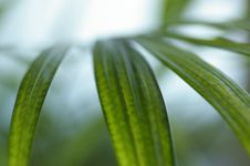 Free Leaves Royalty Free Stock Photography - 4986727