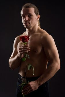 Free Dark Side Of A Rose Royalty Free Stock Photography - 4987107