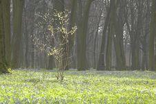 Free Spring Royalty Free Stock Photo - 4987325