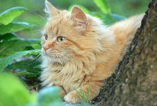 Free Cat Stock Image - 4988131