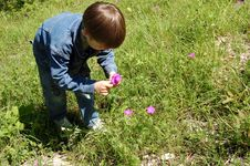 Free Boy Collecting Pink Flowerses Stock Images - 4988344