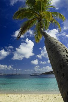 Free Beach Dreams Royalty Free Stock Photo - 4988685