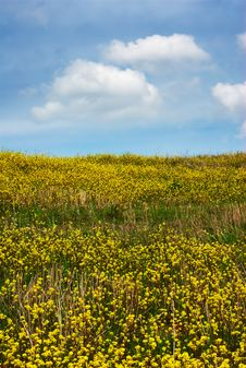 Free Yellow Hillside Royalty Free Stock Images - 4989829