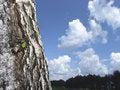 Free Leaf Node And Sky Stock Photos - 4994973