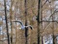 Free Sea Gull Stock Image - 4998541