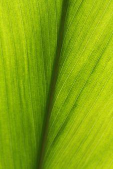 Free Foliage Stock Images - 4990354