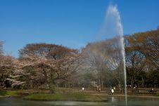 Free Yoyogi Park - Shinjuku - Tokyo Royalty Free Stock Images - 4991259