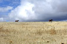 Free Portugal, Alentejo: Landscape With Horses Royalty Free Stock Photography - 4991277