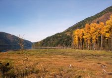Free Aspens And Lake Stock Photography - 4991402