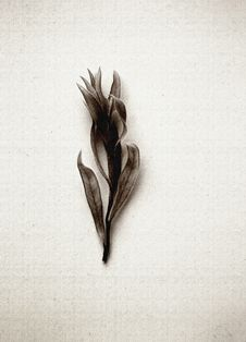 Free Dried Plant Still Life Art Royalty Free Stock Images - 4991409