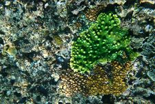 Free Green Coral Stock Images - 4991574