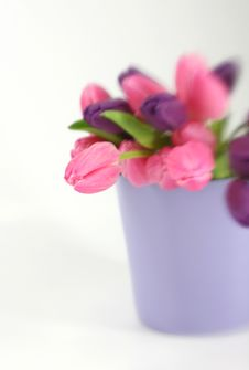 Free Flowers Stock Photography - 4991742
