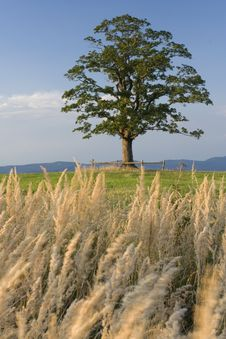 Free Lonely Tree And Green Landscape Royalty Free Stock Photography - 4992237