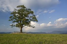 Free Lonely Tree And Green Landscape Stock Image - 4992271