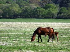Free Horses On The Field Royalty Free Stock Photo - 4992905