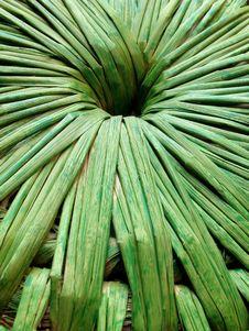 Free Bamboo Stock Image - 4993161