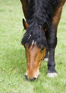 Free Horse Stock Images - 4993214