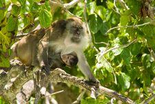 Free Monkey Family Stock Photo - 4994140