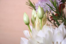 Free Flowers Bouquet Royalty Free Stock Images - 4994219