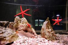Red Sea Star Stock Photos