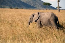 Free Young Elephant In The Grass Stock Images - 4994824