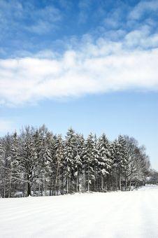 Free Winter Tree 03 Stock Image - 4996231