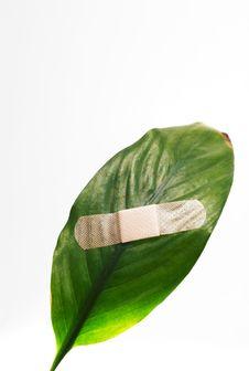 Free Global Warming Leaf Bandaged Royalty Free Stock Photo - 4996925