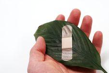 Free Global Warming Leaf Bandaged Stock Photo - 4996940