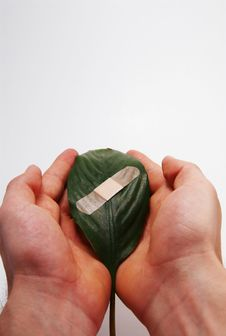 Free Global Warming Leaf Bandaged Stock Photography - 4996952